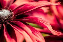 Flowers & Plants / Flowers & Plants Stock Photos Free Download