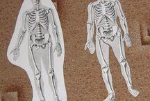 body - tělo