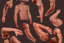 Anatomy - arms photos
