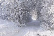 Christmas  priroda Zima