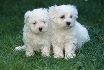 Puppies  / by Bernadette Gireaud