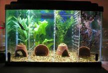 Funkee Fish Tanks