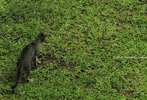 Animals / wildlife Indonesia