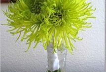 wedding bouquets / by Shaya Sherwood