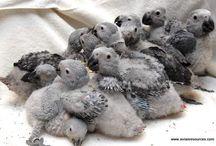 animals-parrots-bogs