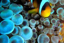 Saltwater fish / by Cameron Lockhart
