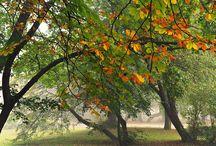 Autumn - Fall - ŐSZ