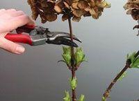 Verzorging planten