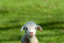 Everything about you (lamb-elephant-feline)