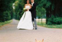 Zvířata na svatbě / Zvířecí hosté