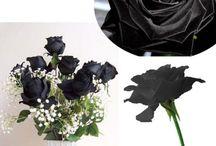 Black Rose Flower Rose Seeds