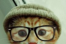 cats in hats / by Kate Krug