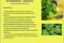 Fűszerek és gyógynövények