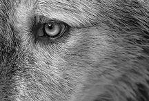 Pups / by Josh Neugass