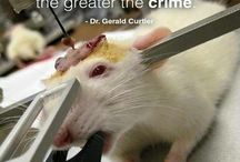 stop the abuse of animals