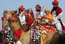 pushkar camel fest