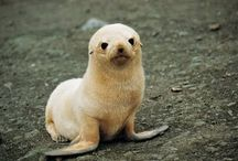Cute animals / by Debbie Chancey