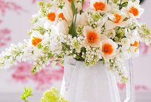 Daffodil / Narzissen