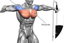 Brust Muskeln