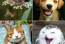 Uśmiechnięte zwierzaki / Smiling animals