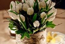 wedding tulip