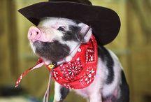 pigs / by Stacy Binkley