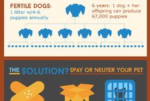 Spay and Neuter / spay and neuter