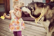Love of a Malamute / All about Koda the malamute and his kiddos that he loves and protects!