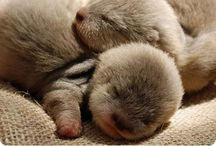 Otters (my water babies) / by Bethaney Knox