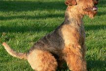 welsh terrier and friends / by Irina Kolisnychenko
