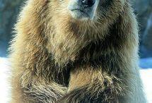 Bär/Bear