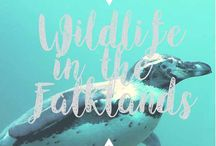 Wildlife, animals