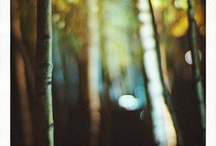 //Forest//