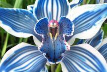 orchidées / monde de merveilles / by Béatrice Dumont