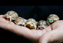 Babies Ninja Turtles