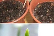 Необычные растения. Домашняя оранжерея. / Советы для разведения комнатных растений