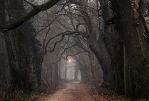 Into The Woods and other strange places