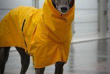 Sighthounds are Da Best