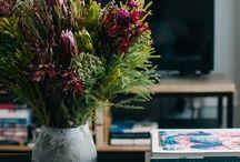 plants/ flowers