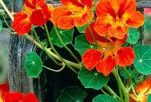 In My Garden / Plants that I have in my garden...