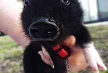 Animals cuties