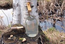voda zo stromov