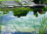 Ashley Penn - Swimming Pools / A collection of biological, natural, and well integrated outdoor swimming pools