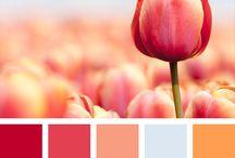 Barevné inspirace / Colorscheme