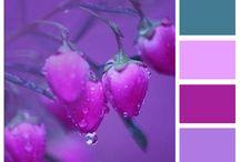 Interior - Pink & Purple