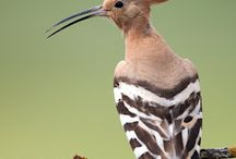 Birdwatching / #bird