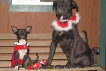 Happy Holidays! / Holidays are even more special with furry friends. / by Petfinder.com