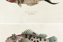 ボタニカルイラストレーションと魚