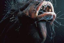 глубоководные виды