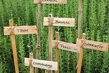 Garden Ideas / by Kim